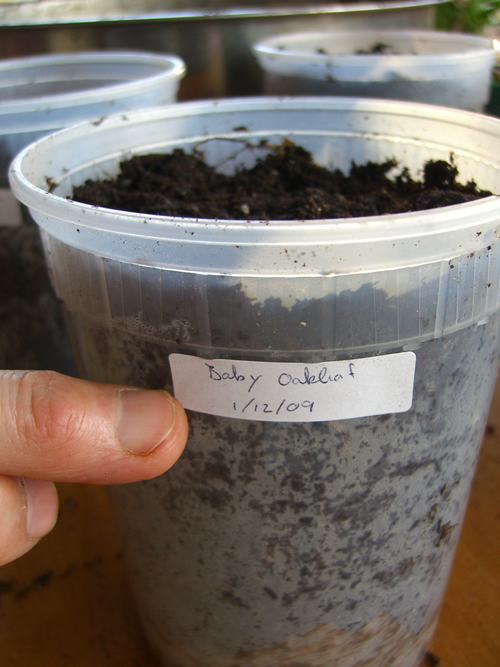 Growing your food indoors in containers - Best soil for container gardening ...