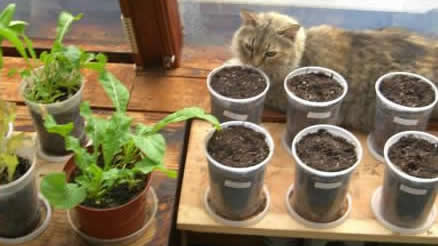 Growing Your Food Indoors in Containers